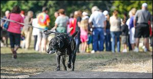 The park will have three fenced areas for dogs to play off-leash: one for dogs 25 pounds and smaller and two for larger dogs that will be used alternately to give the grass time to recover.