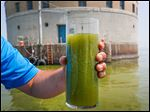 In this August photo, a glass holds algae-filled water scooped up from near Toledo's water intake site in Lake Erie.
