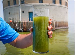 Microcystis fills a glass of Lake Erie water near the Toledo water intake crib.
