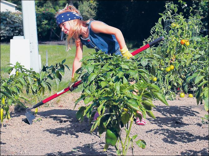 Elly Evarts, 5, kinderg Elly Evarts, 5, kindergartner, living in Gibsonburg uses her favorite tool to hoe weeds between pepper plants.