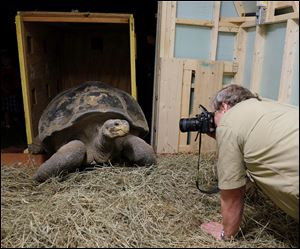 R. Andrew Odum, the Toledo Zoo's curator of herpetology, photographs Emerson, the Galapagos tortoise, being delivered and unboxed. Emer­son, es­ti­mated to be about 100 years old, ar­rived Wed­nes­day eve­ning.