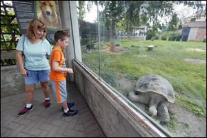 Laura Fawcett of Toledo and  her son, Evan, 8, look through the glass to see the zoo's newest attraction.