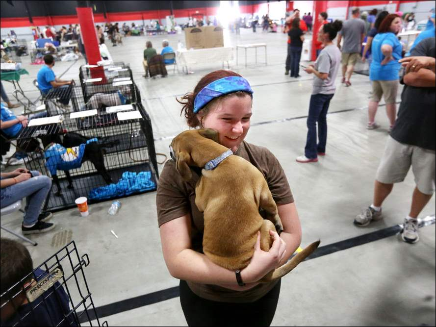 Olivia Bell, a volunteer with Planned Pethood from Bowling Green State University, cuddles Rose, a four-month-old female Lab and Boxer mix who is up for adoption,