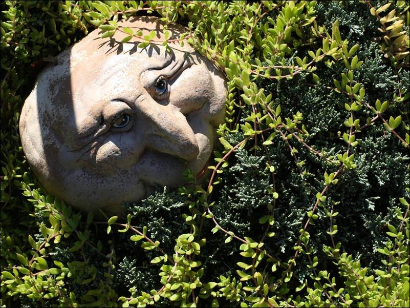 A stone gnome creeps in the garden of Shirley and Don Konoff.