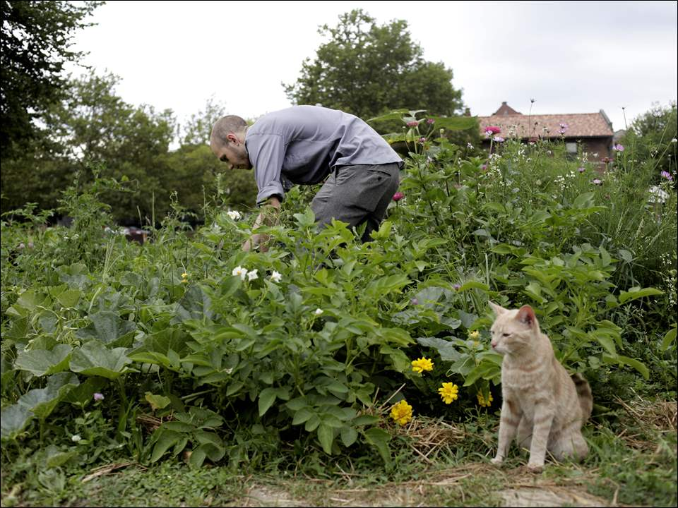 Sylvania resident Elliot Charney looks for ripe vegetables to pick.