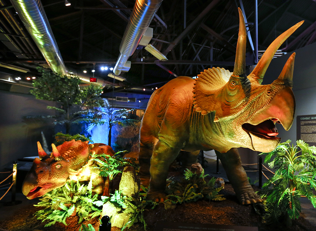 Dinosaurs come alive at downtown science center the blade Dinosaur museum ohio