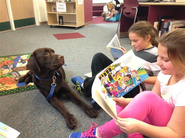 Dog Training Schools In Toledo Ohio