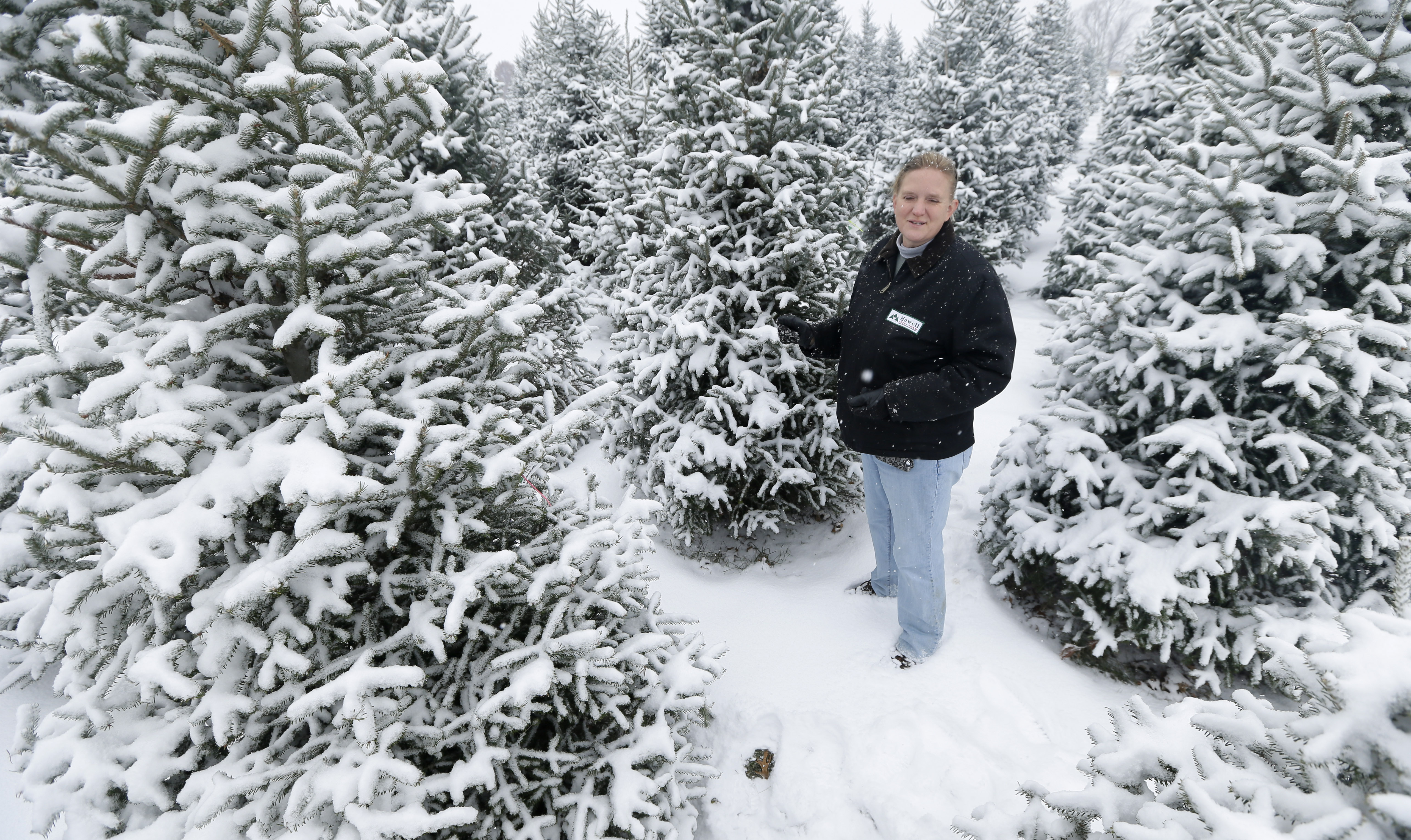 Growers grateful for higher Christmas tree prices - The Blade