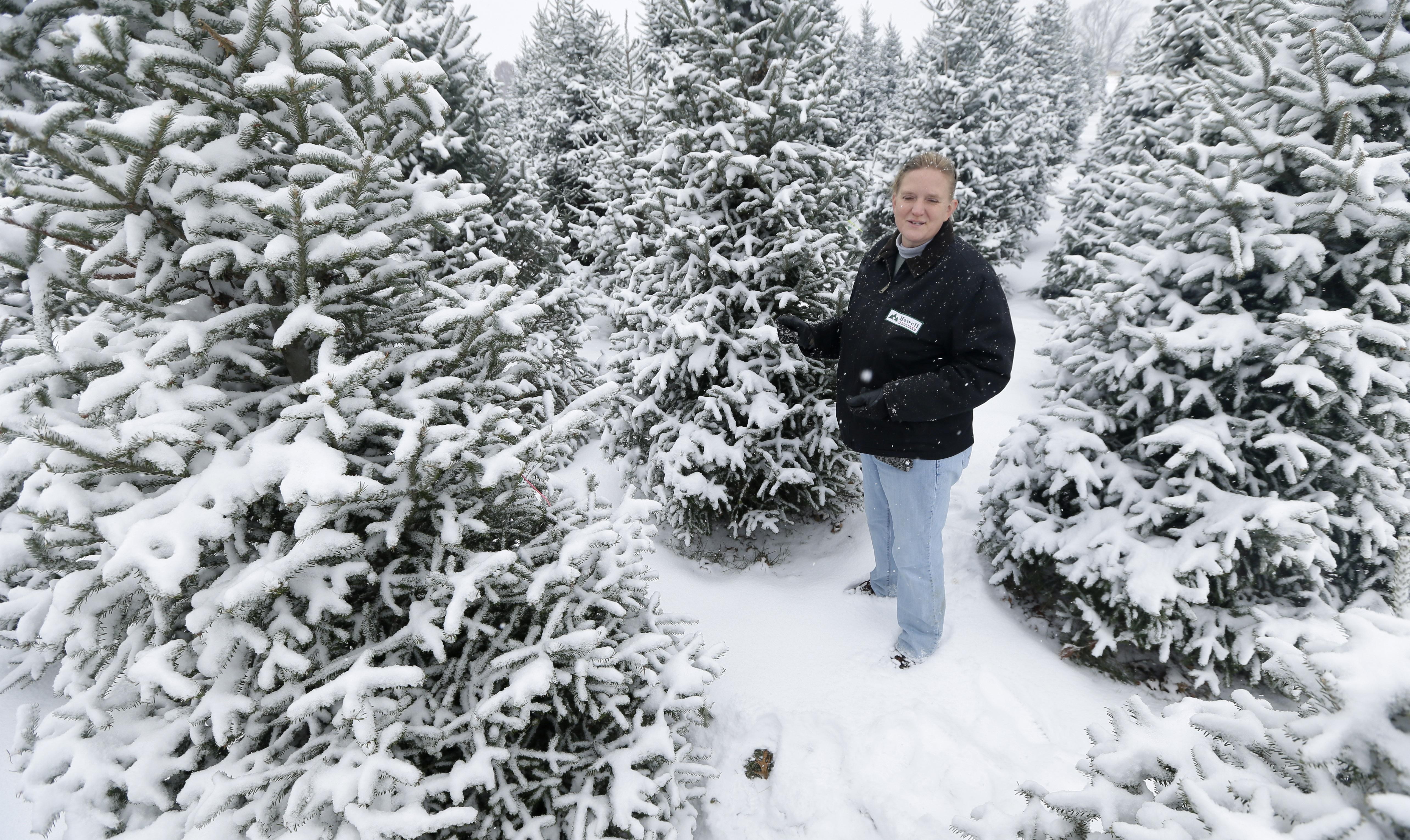 Christmas Tree Farmers