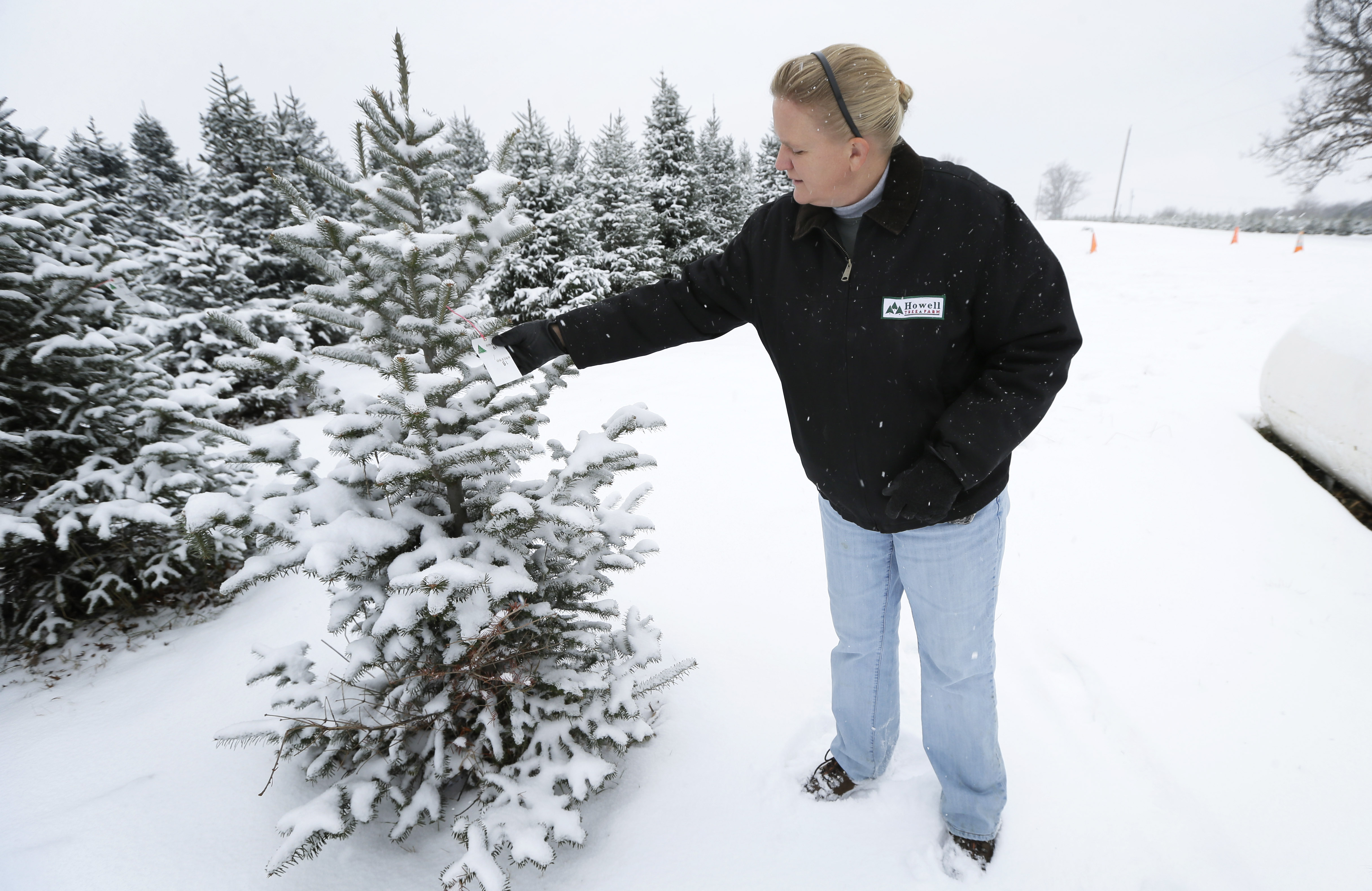 Growers Grateful For Higher Christmas Tree Prices