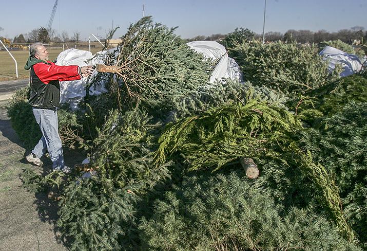 Christmas Tree Disposal At Hand