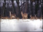 The Michigan Department of Natural Resources has the Upper Peninsula Habitat Workgroup focusing on improving and conserving critical  winter deer habitat.