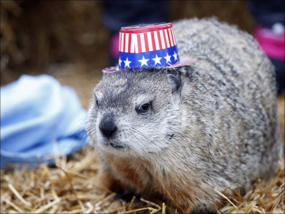 "The groundhog  ""Old Blue Eyes Hucky Too"" opens up his blue eyes while wearing a patriotic hat during."