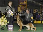 A 3-year-old female German Shepherd from Springfield Township named Rumor Has It V Kenlyn, held by co-owner Kent Boyles of Wisconsin, took the best in breed title at the Westminster Kennel Club show and went on to place fourth in the herding group.