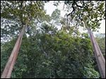 A view of treetops shot by the Google's Trekker device on a zipline above the Amazon jungle in South America.