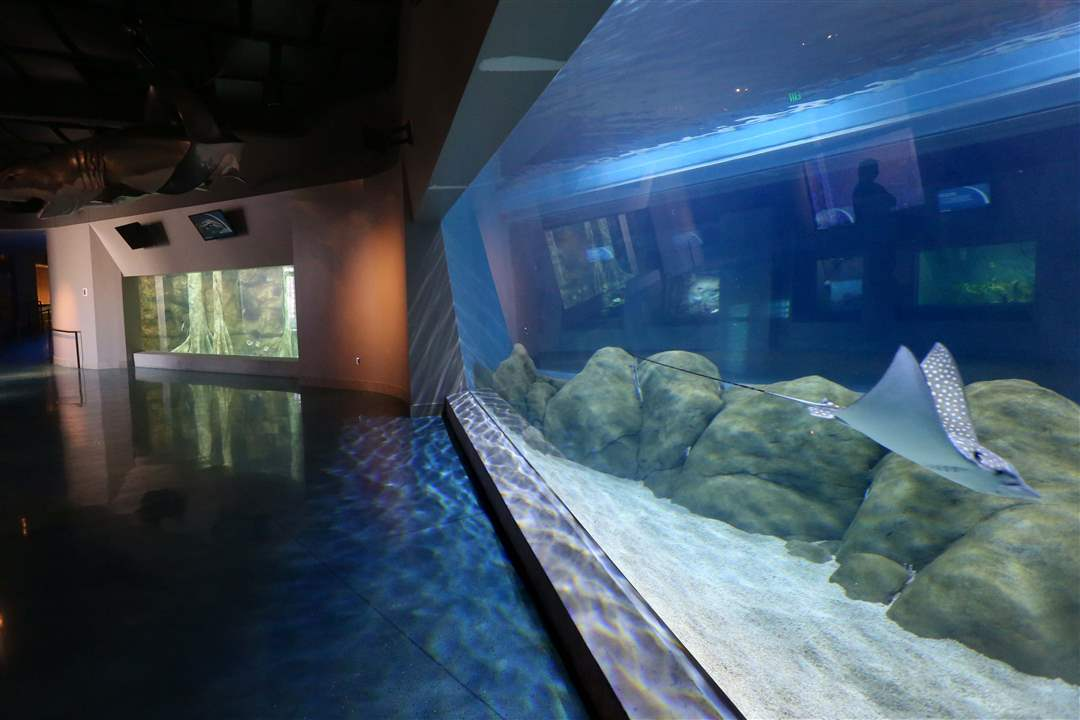 Toledo Zoo aquarium renovations - The Blade