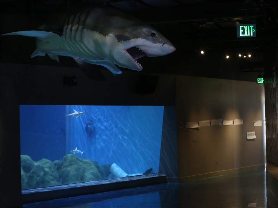 The Gulf of Mexico exhibit is one of two visitors will see first when entering the Toledo Zoo's aquarium.