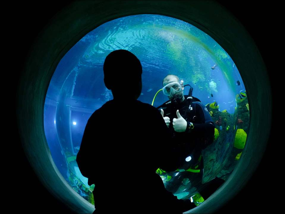 David Gauthier, 9, Chelsea, Mich., gets a thumbs up from zoo aquarist Dennis Law as he scuba dives in the 90,000 gallon reef.