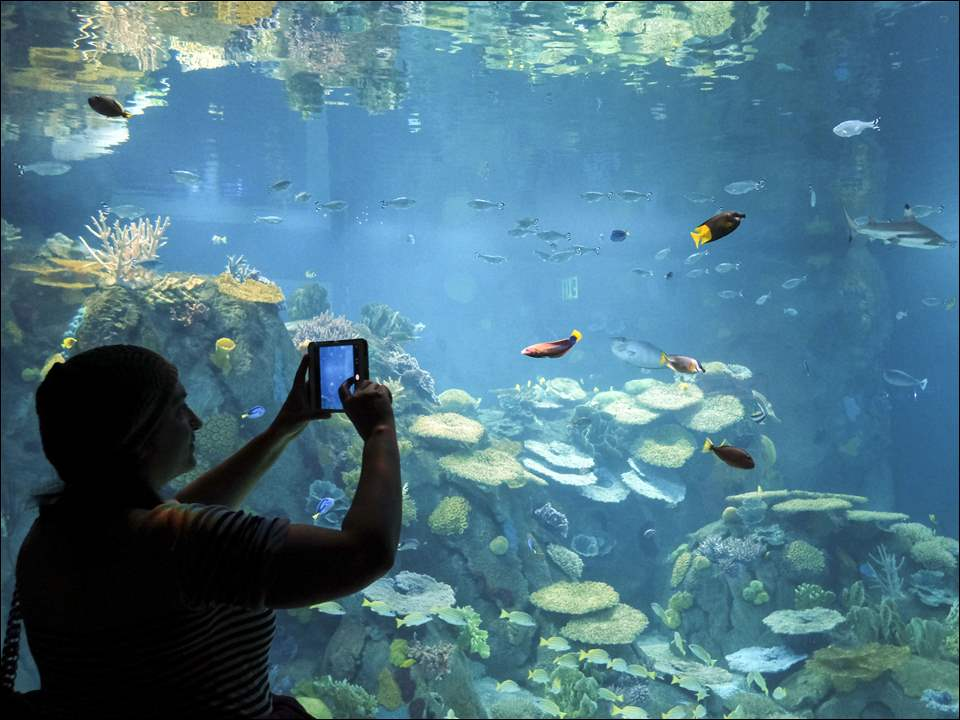 Mary Garcia photographs fish inside the new aquarium Tuesday, 03/24/15, at the The Toledo Zoo in Toledo, Ohio. The zoo held  a reception for its employees and volunteers to preview the new aquarium.