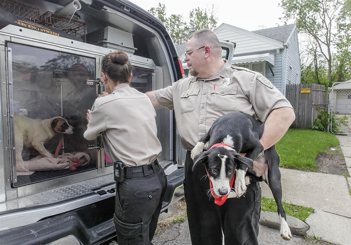 14 Dogs Voluntarily Surrendered In Toledo Toledo Blade