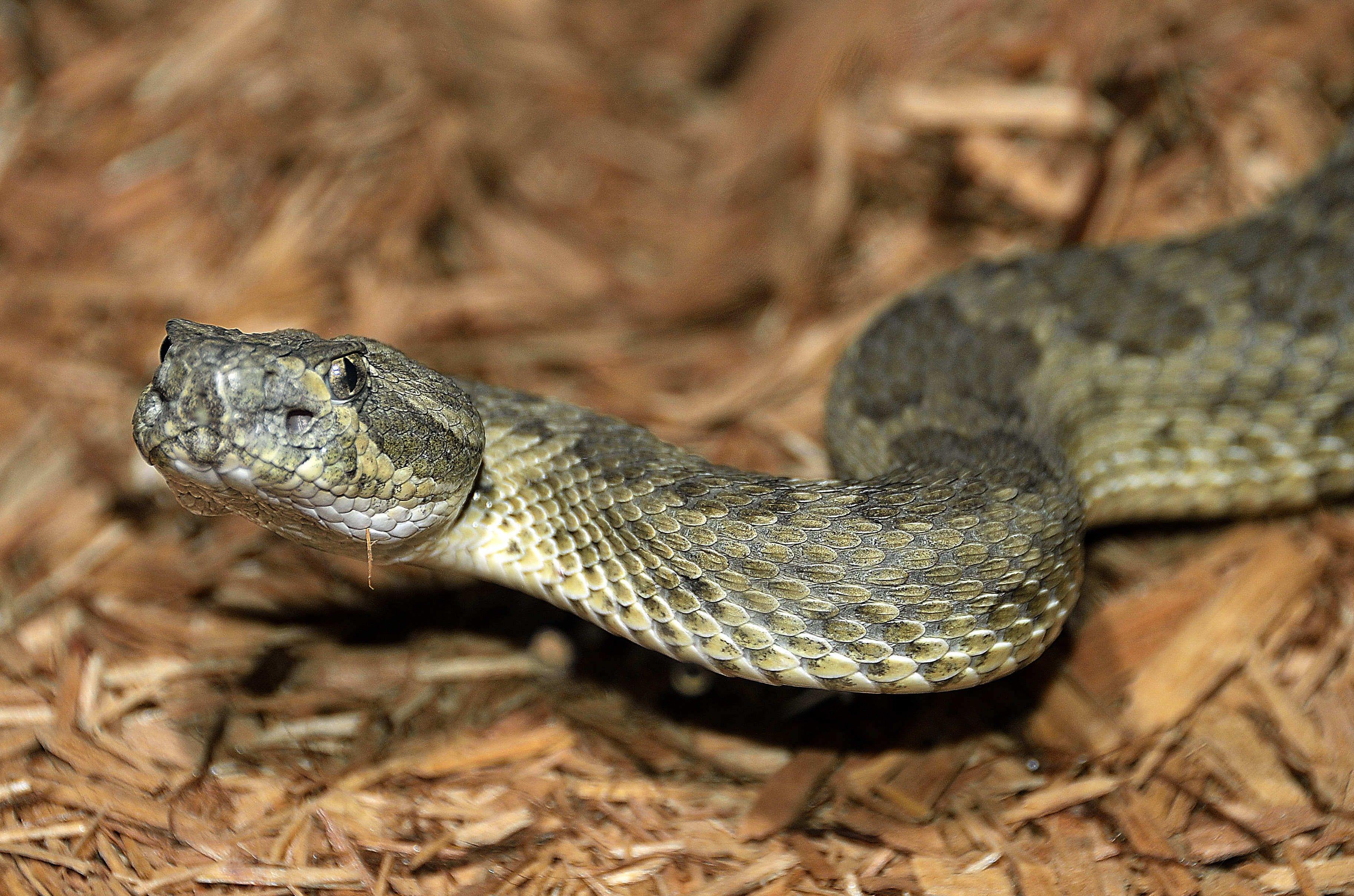 Navajo Beliefs On Snakes Lead Tribal Zoo To Abandon