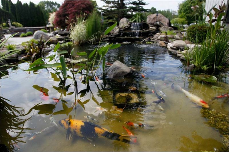 Toledo blade for Stone koi pond