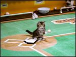 "The ""Paw Star Game"" airs at 5 p.m. Sunday on the Hallmark Channel."