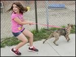 Brooklyn Brumley, 10, leaves the Lucas County Canine Care & Control in Toledo with her newly adopted 'pit bull,' Elsa.