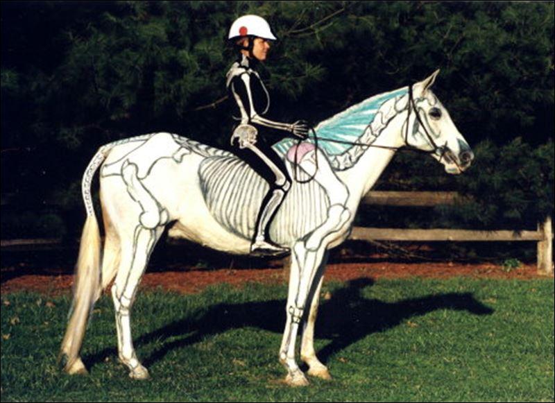 Horse Anatomy Inmotion Picsbud