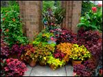 Hundreds of varieties of flowers and plants add a deluge of color to the Toledo Zoo gardens