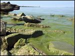 Widespread algae blooms in Lake Erie during the summer have Port Clinton and other lakeside community and business leaders worried about how the algae will affect tourism, which generates $12.9 billion annually in Ohio's eight lakefront counties.