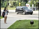 Students take photos of a turkey near Pierpont Commons on the University of Michigan's North Campus in Ann Arbort.