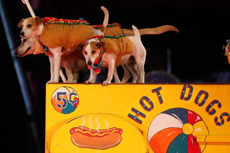 circus03p-Hot-Dogs