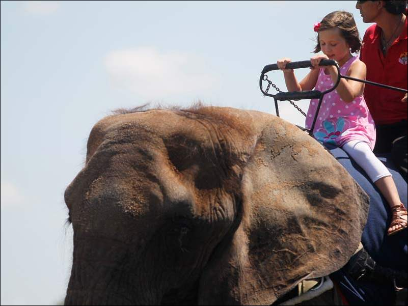 Gabby Griffin, 7, of Green Springs rides an elephant.