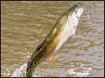 The state of Ohio is seeking feedback from anglers in order to fine-tune the trout stocking program.