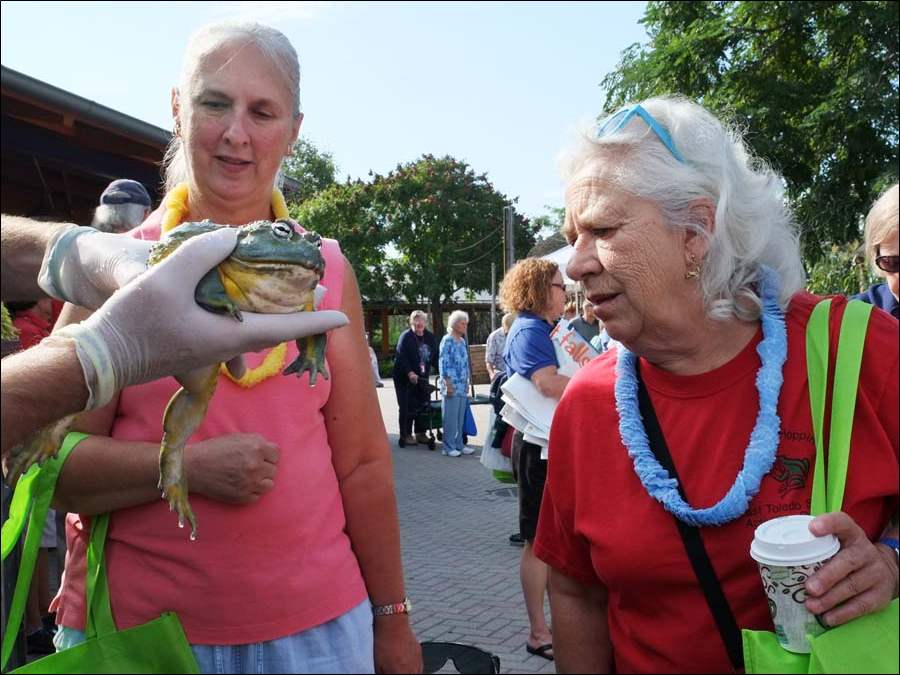 Judy Brentlinger left, and Bonnie Drayton, right, both of Toledo, get a close look at 'Prince Charming,' an African Bullfrog held by Will Thompson, during Senior Safari Day at the Toledo Zoo.