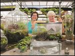 Mary Machon, left, and Rose Brancatto, of Bensell Greenhouse, show some examples of terrariums.
