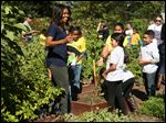 First lady Michelle Obama, joined by school children from Washington area, participate in a harvest of the White House Kitchen Garden, Tuesday, Oct. 6, 2015,  at the White House in Washington. (AP Photo/Andrew Harnik)