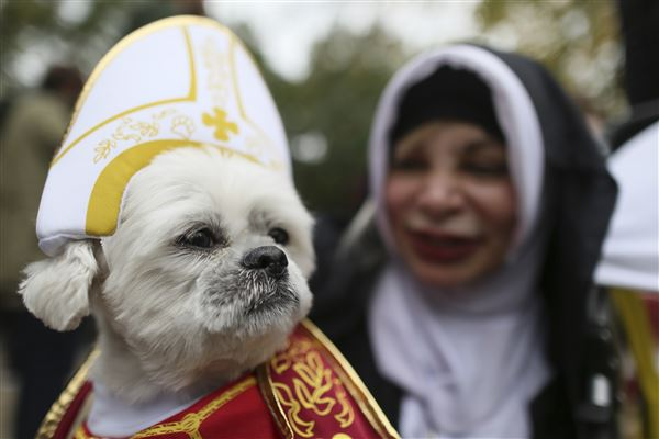 New York park goes to the dogs for 25th Halloween dog parade - The ...