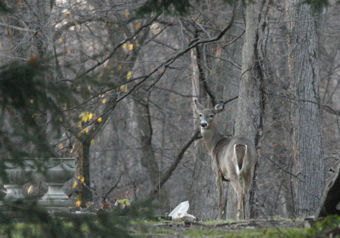 Ohio, Michigan deer hunting seasons switch from archery to
