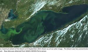 Lake-Erie-Algae-22