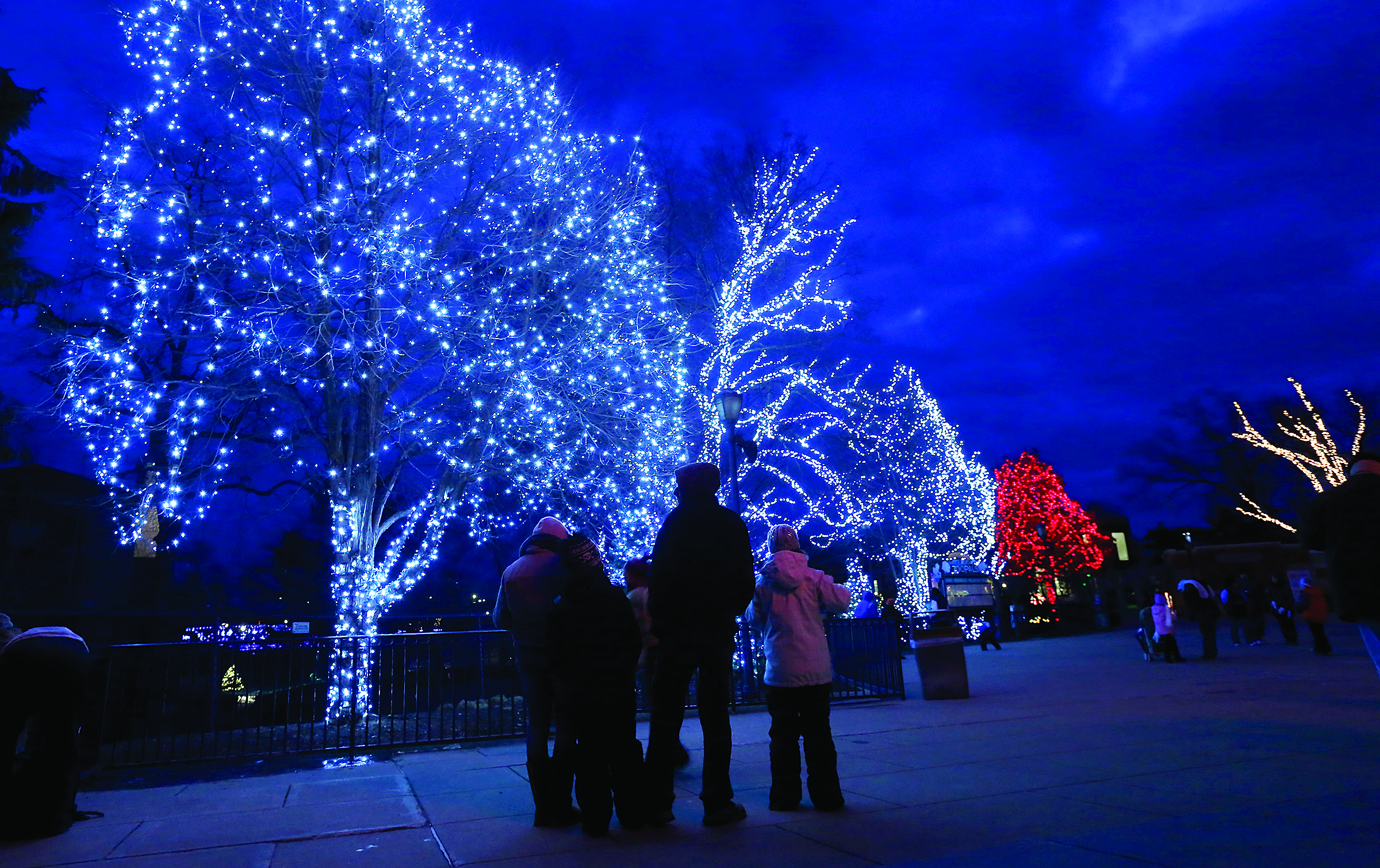 Toledo Zoo Lights Before Christmas