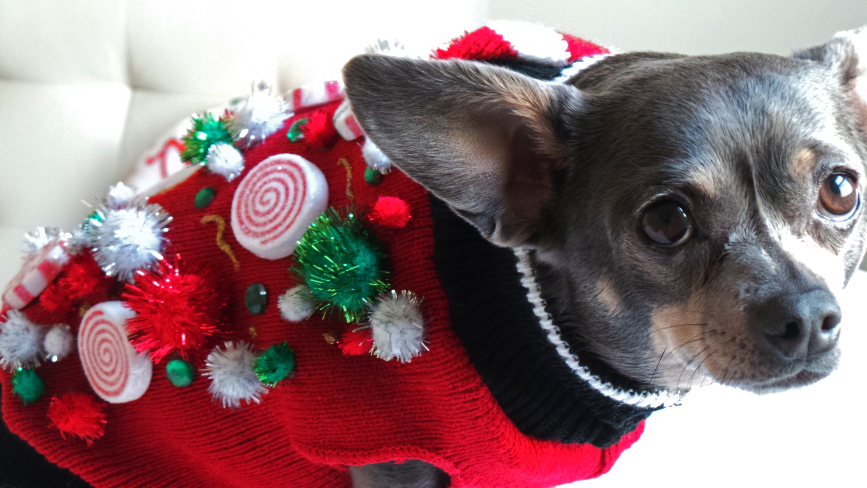 cats and dogs partying like animals in ugly holiday sweaters the blade