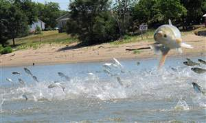 Asian-Carp-Great-Lakes-2