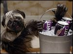 "This image provided by Mountain Dew shows a ""Puppymonkeybaby"" in a scene from the company's Kickstart spot for Super Bowl 50."