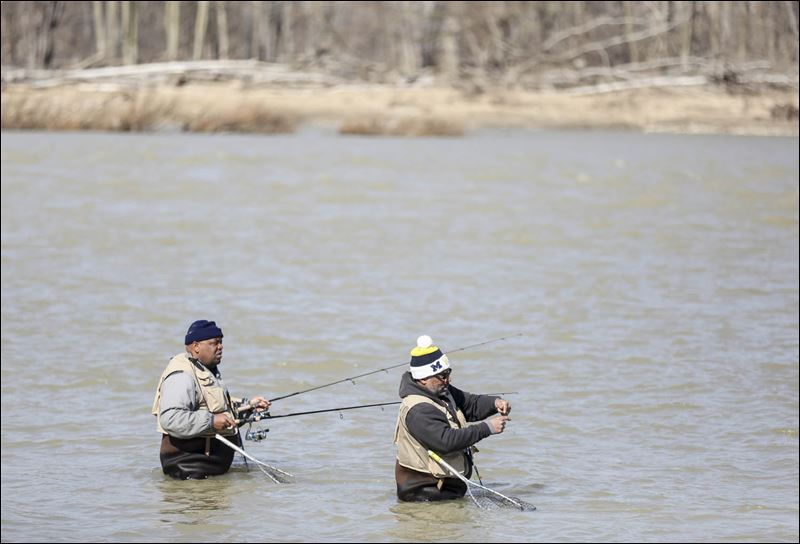 Toledo blade for Maumee river fishing report