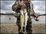 A fisherman brings his catch of ashore at Orleans Park in Perrysburg on March 18, 2016.  Walleye fishing is heating up on the Maumee River.