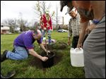 John Gillespie, left, plants a black Tartarian cherry tree while Tree Toledo members from left, Suzanne Gillespie, Tom McDonald, and Carol Falquette help during a  tree-planting ceremony sponsored by Tree Toledo, marking Earth Dayand highlighting the group's effort to plant a tree for each person in Toledo at the Zepf Center Orchard on Friday.