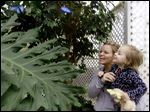 Shasta Peace of Toledo and her daughter, Bella Lind, 2, look at butterflies in trees at the Butterfly House. The house in Whitehouse opened for the season Sunday with more than 50 species of butterflies, including some like the one below.