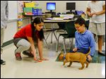 Liam approaches Johnna Ruiz, left, and Adrian McPherson, both fourth graders. Old Orchard Elementary School teacher Jean Keating uses Liam, a 9-week-old foster puppy, to supplement her students in learning in many subjects.